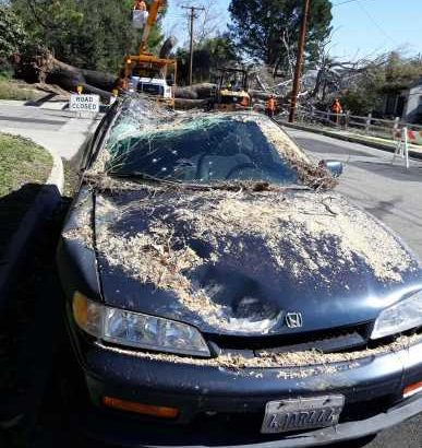 1994 Honda Accord Dx part out tree landed on it